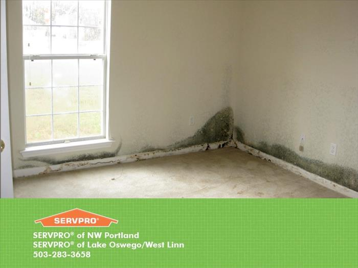 Mold Remediation Does Your Lake Oswego Home Have A Mold Problem?