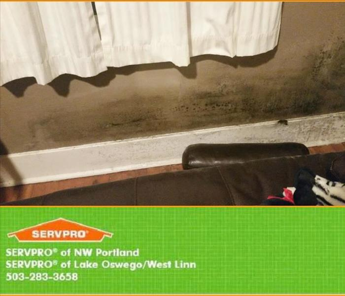 Mold Remediation Clackamas County Residents: Follow These Mold Safety Tips If You Suspect Mold